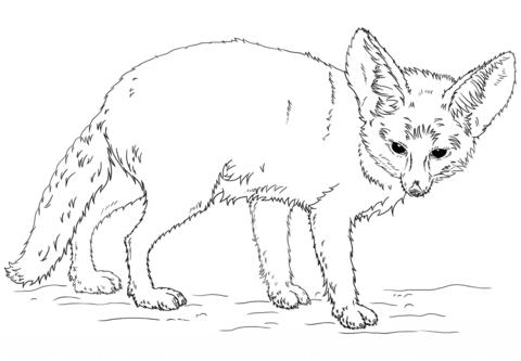 free fennec fox free fennec fox reference sheet by littlepuffin on deviantart fennec free fox