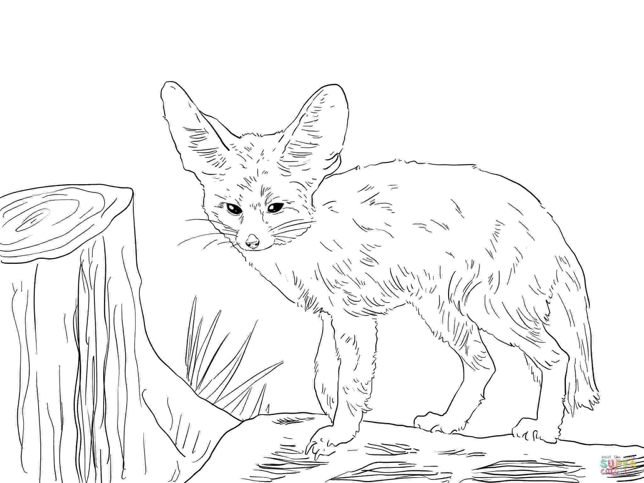 free fennec fox swift fox drawing at getdrawingscom free for personal fennec fox free
