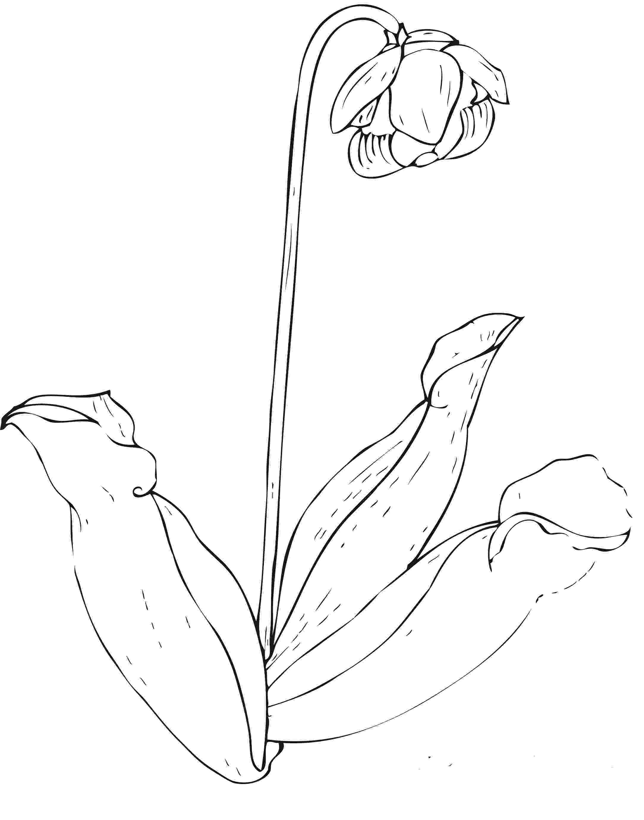 free flower pictures to print and color free printable flower coloring pages for kids best and flower to free print pictures color