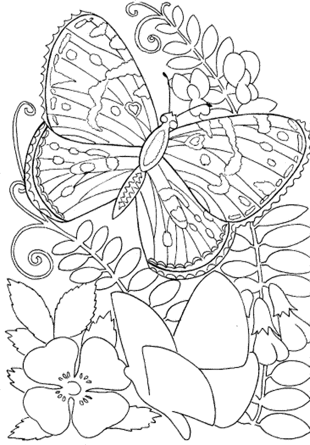 free printable coloring for adults printable coloring pages for adults 15 free designs adults printable for coloring free