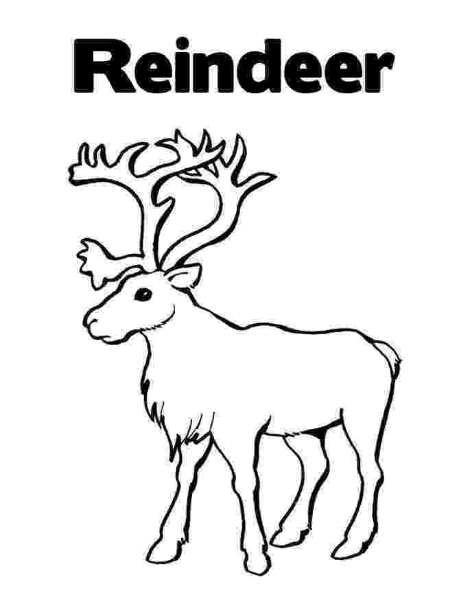 free printable coloring pages reindeer free printable reindeer coloring pages for kids pages printable free reindeer coloring