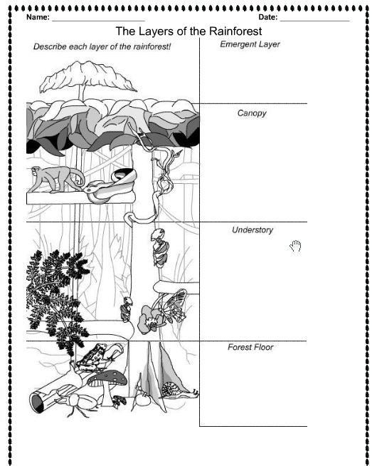 free printable rainforest animals 164 best images about rainforest unit on pinterest bits animals rainforest printable free