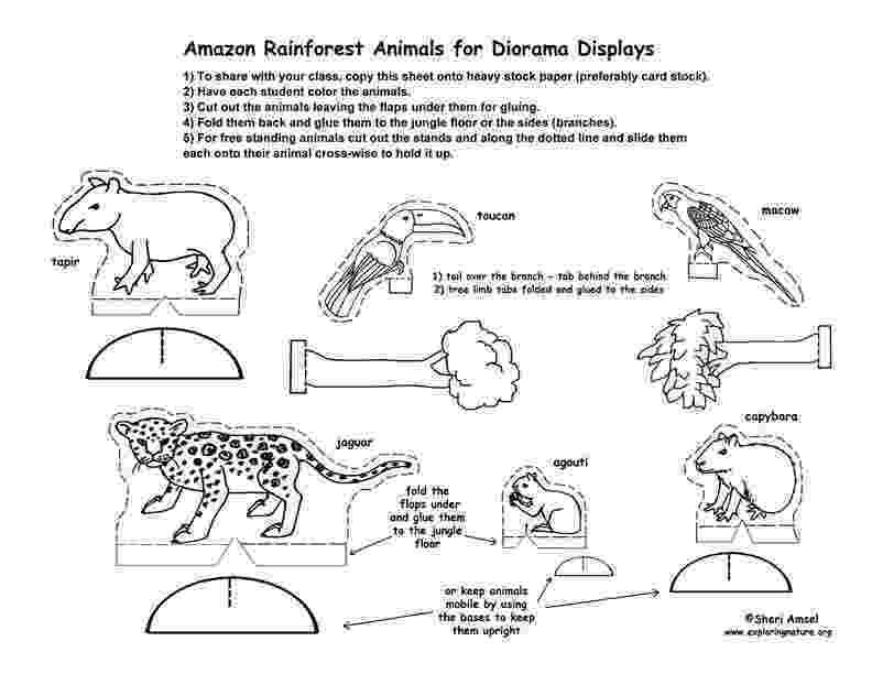 free printable rainforest animals habitats of the world activity printable animals free rainforest
