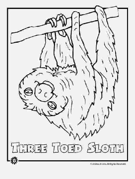free printable rainforest animals rain forest coloring pages k 3 coloring sevierville tennessee free rainforest animals printable