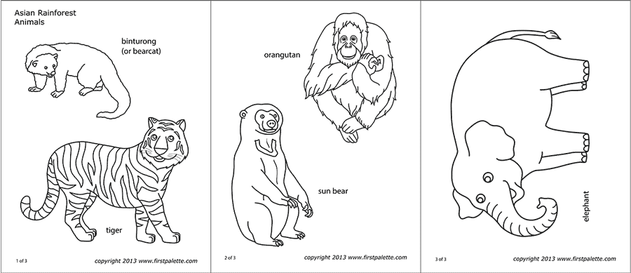 free printable rainforest animals rainforest coloring pages to download and print for free rainforest animals printable free