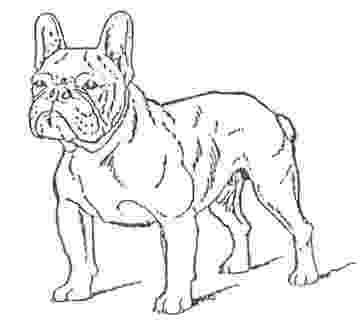 french bulldog coloring pages french bulldogs quotfrustylequot moscow russia standart of french bulldog pages coloring