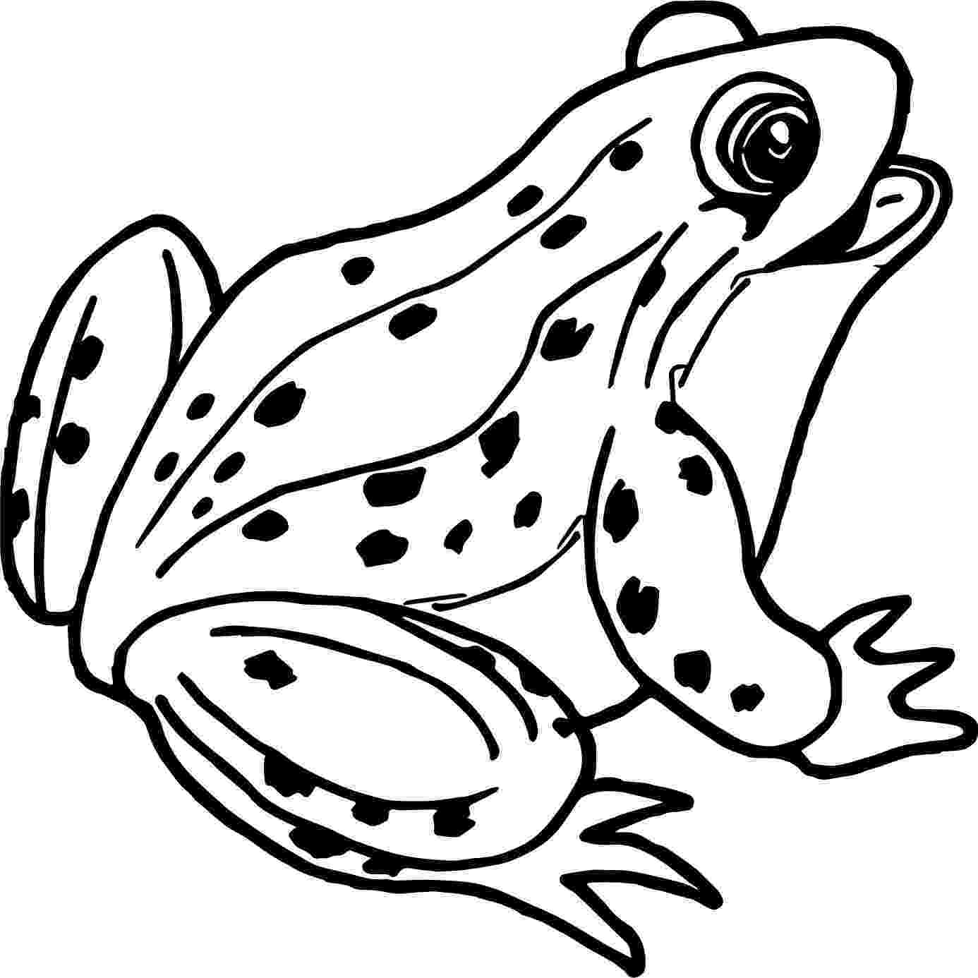 frog to color free printable frog coloring pages for kids cool2bkids frog color to 1 1