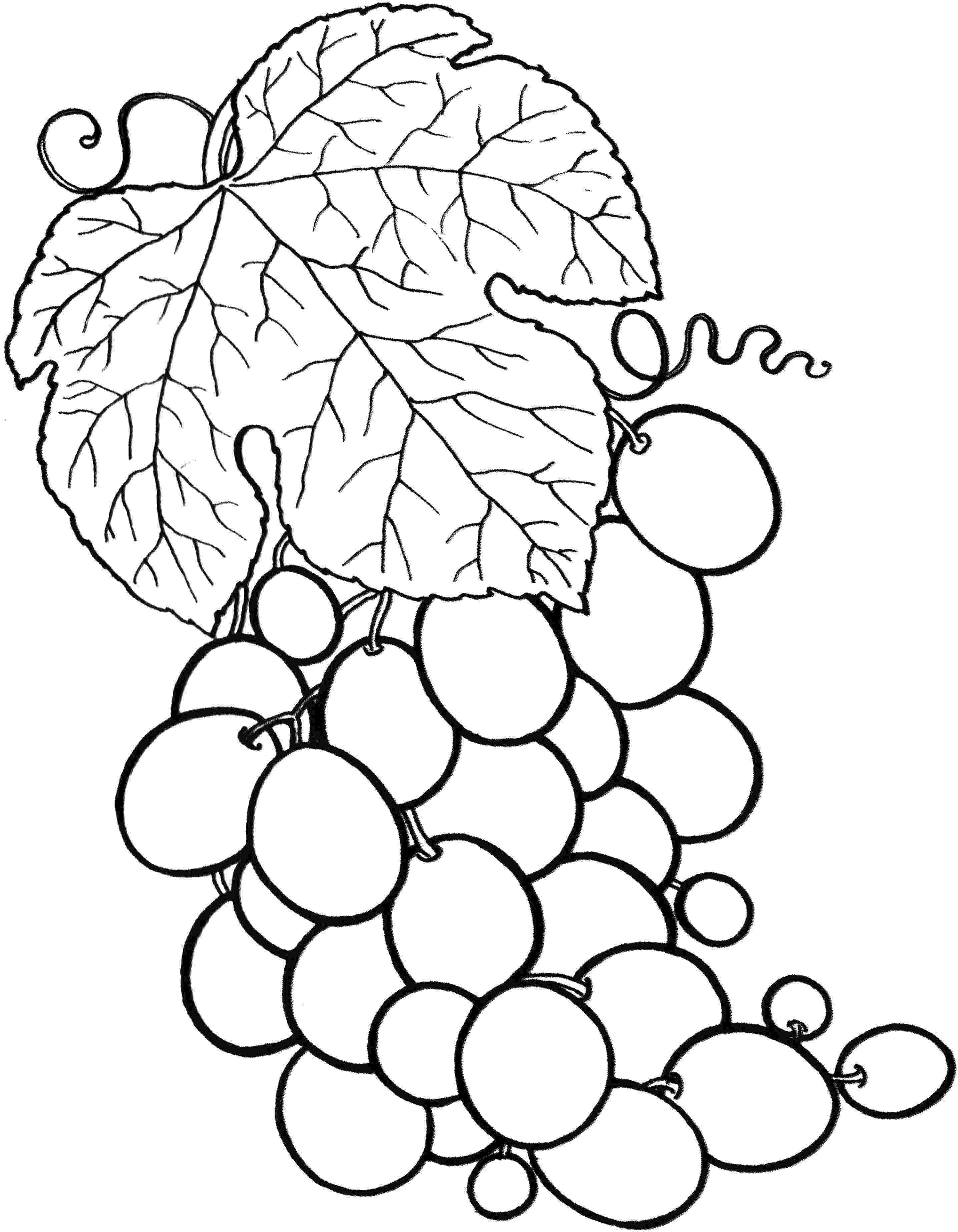 fruit coloring sheets 44 fruits coloring pages for preschoolers fruits coloring coloring fruit sheets