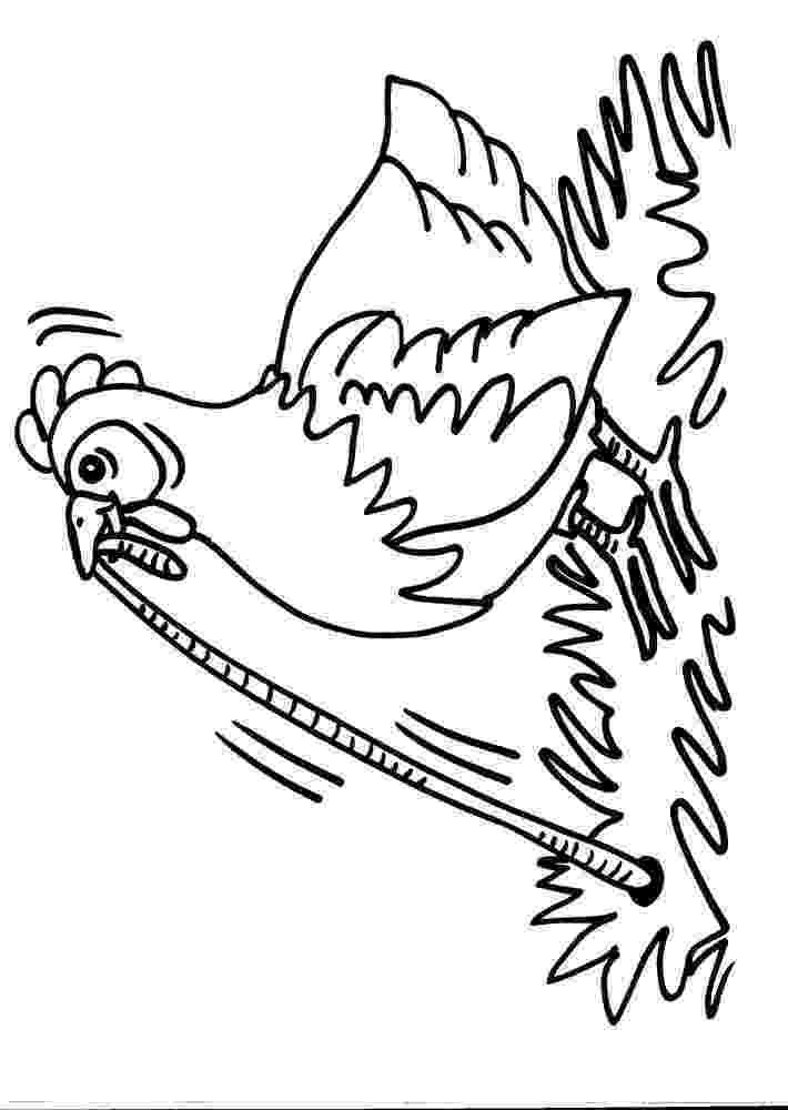 gallina para colorear descargar dibujos de gallos y gallinas para colorear elige para colorear gallina
