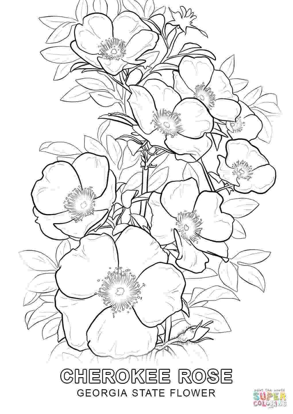 georgia state flower states flower coloring sheets alabama georgia free flower georgia state
