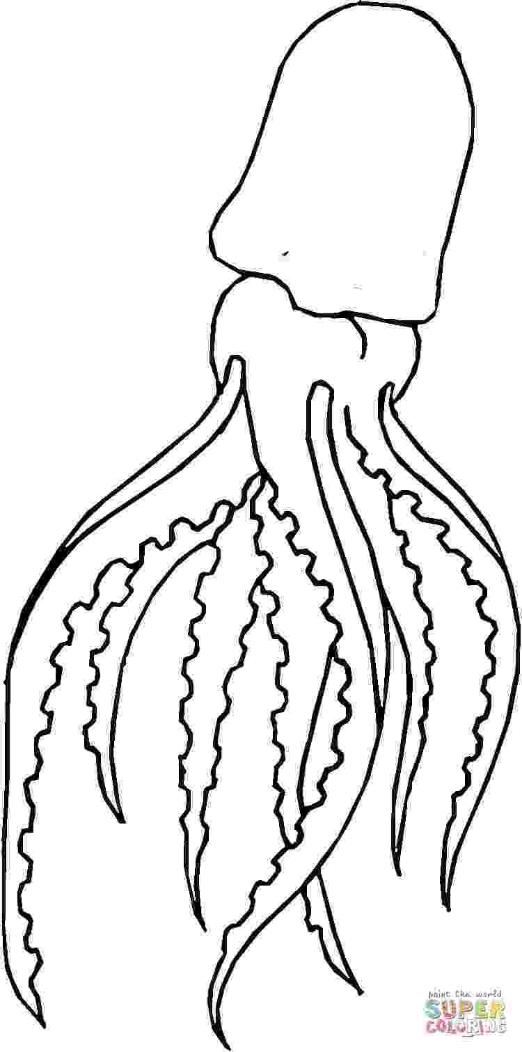 giant squid coloring pages squid coloring download squid coloring for free 2019 squid coloring pages giant