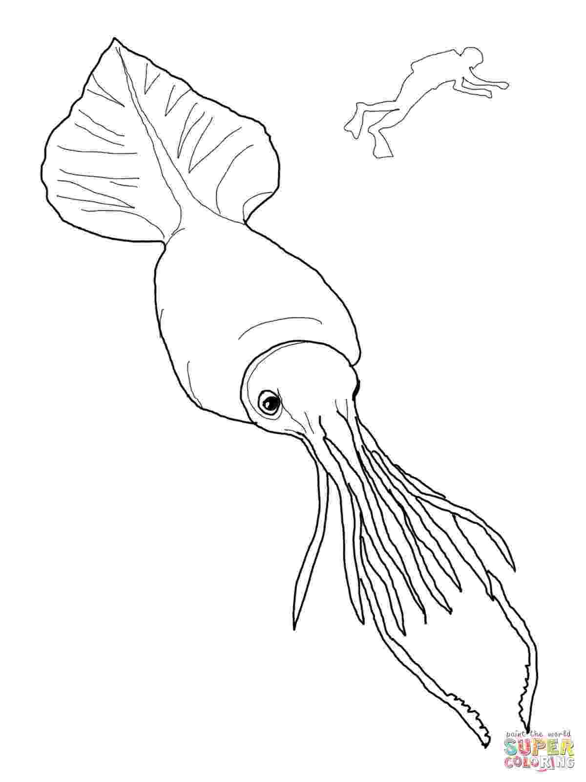 giant squid coloring pages squid coloring pages to printable marine animals pages giant squid coloring