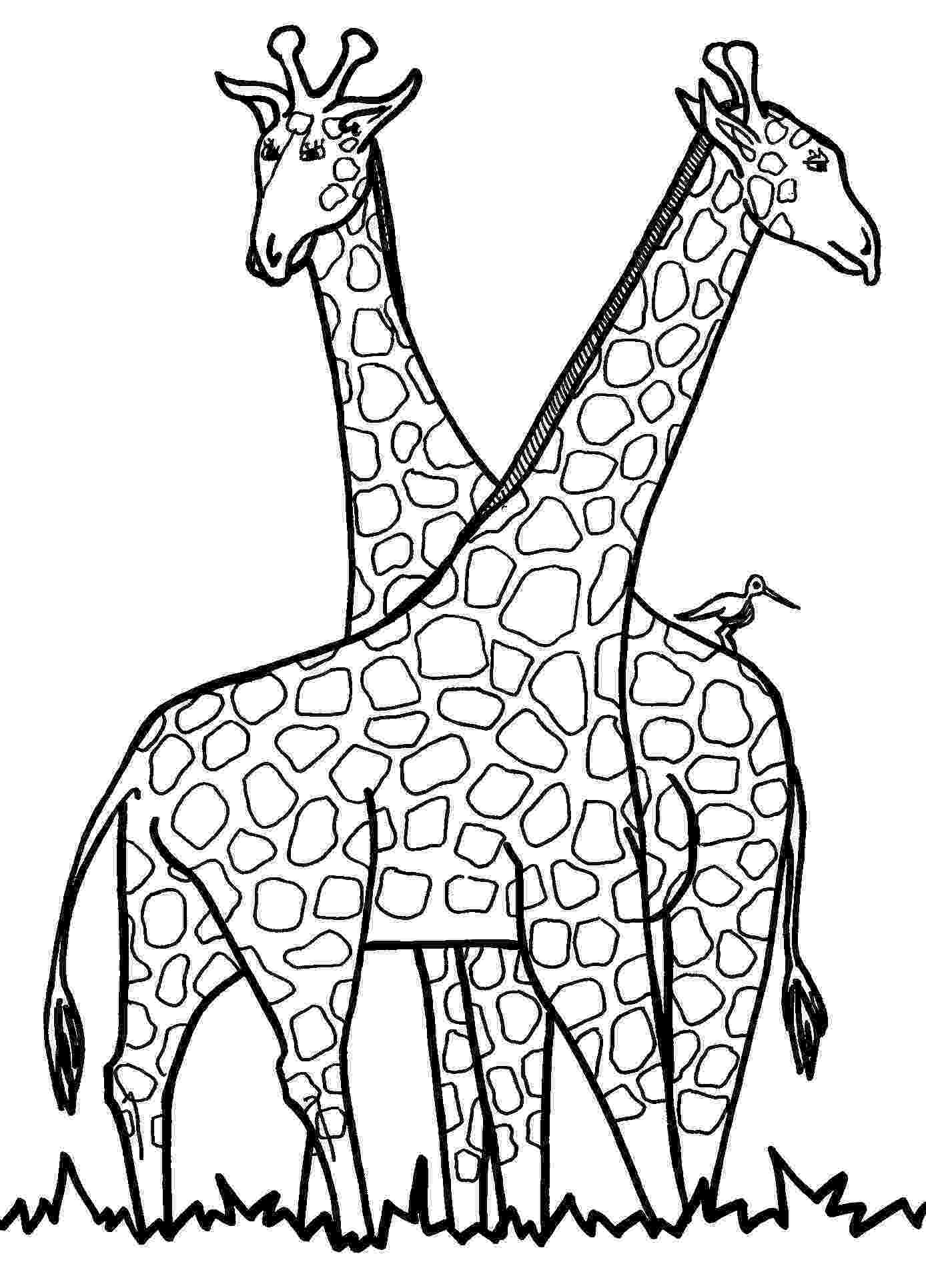 giraffe to color free giraffe coloring pages to giraffe color