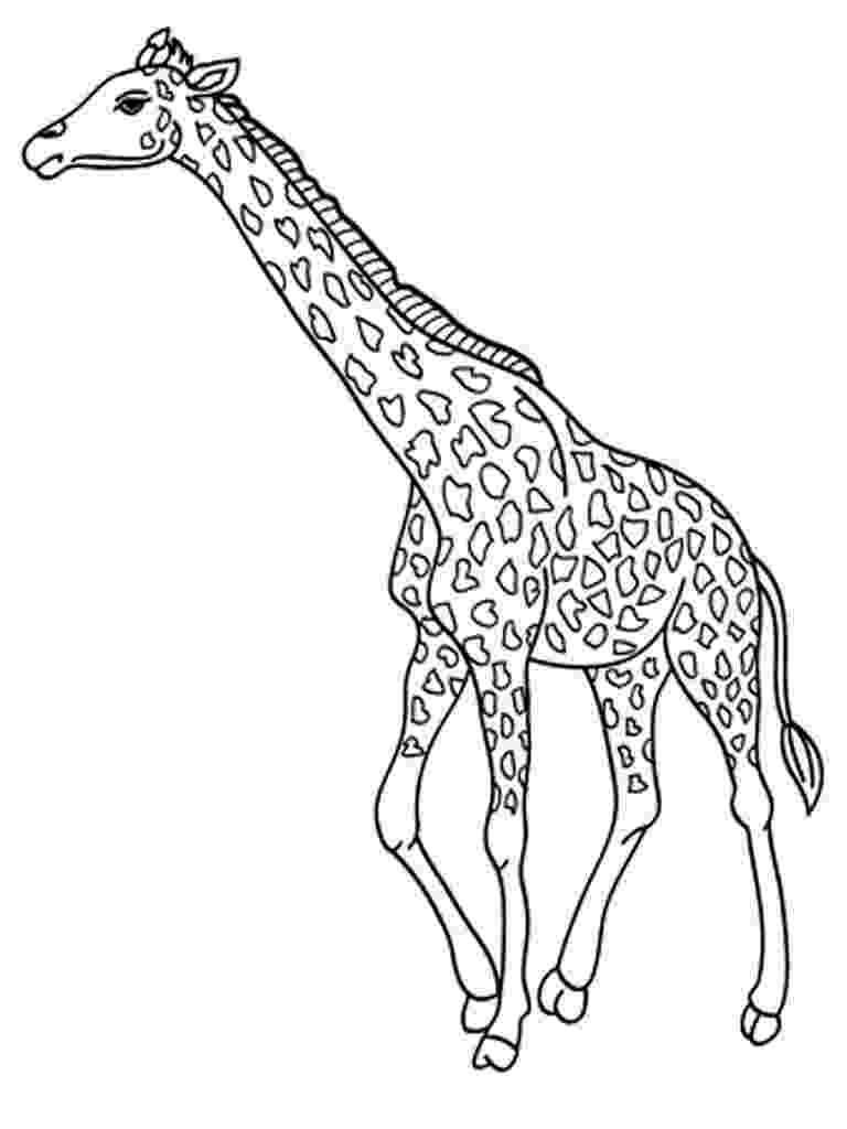 giraffe to color free printable coloring pages giraffe 2015 to color giraffe