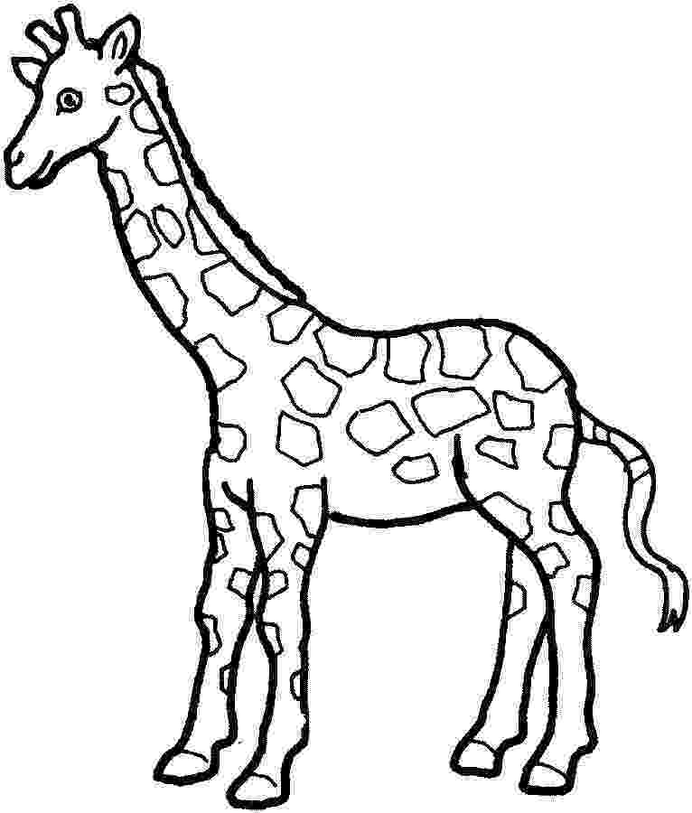 giraffe to color free printable giraffe coloring pages for kids giraffe color to