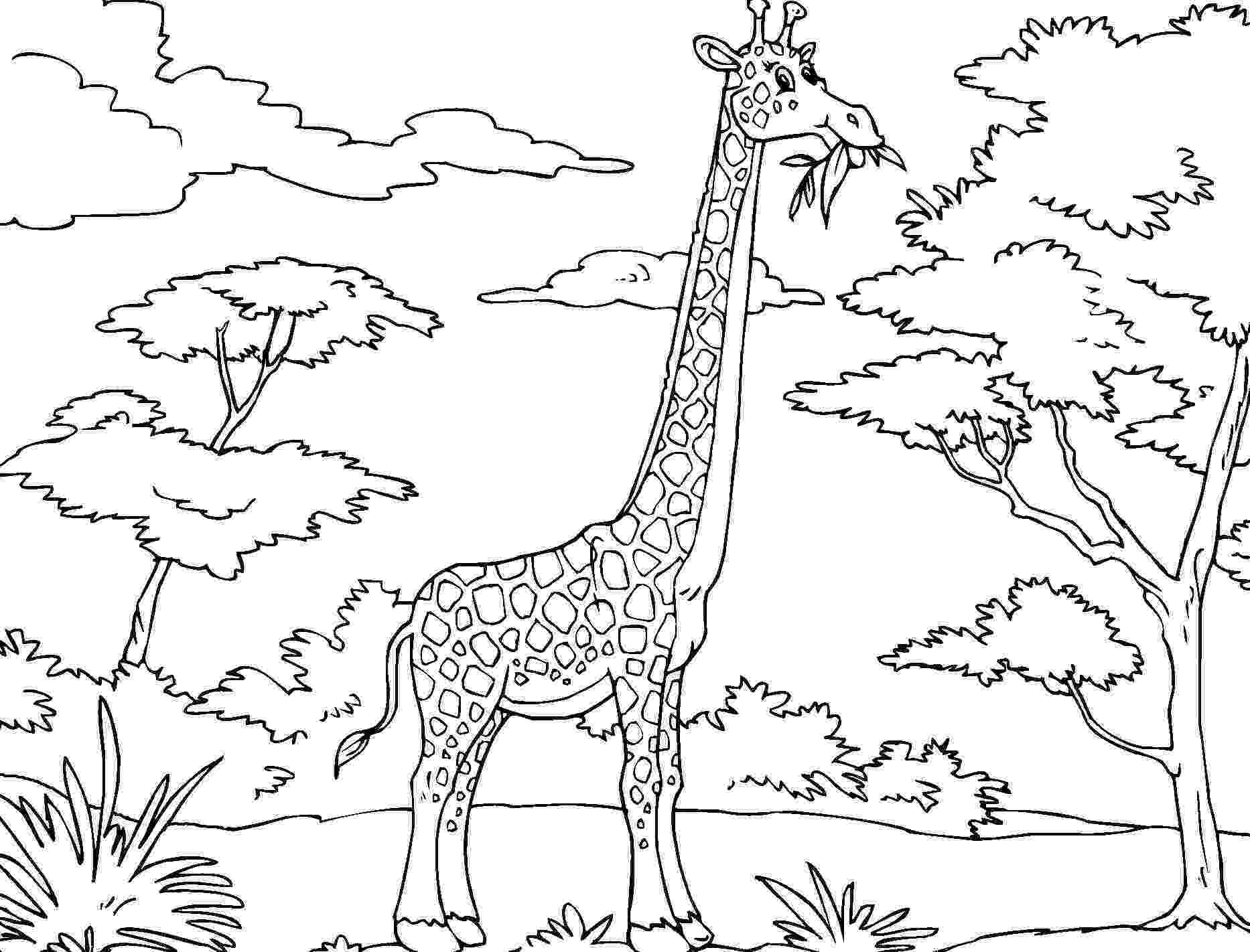giraffe to color free printable giraffe coloring pages for kids giraffe color to 1 1