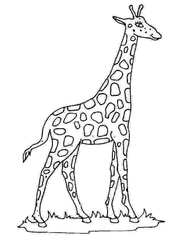 giraffe to color free printable giraffe coloring pages for kids to color giraffe