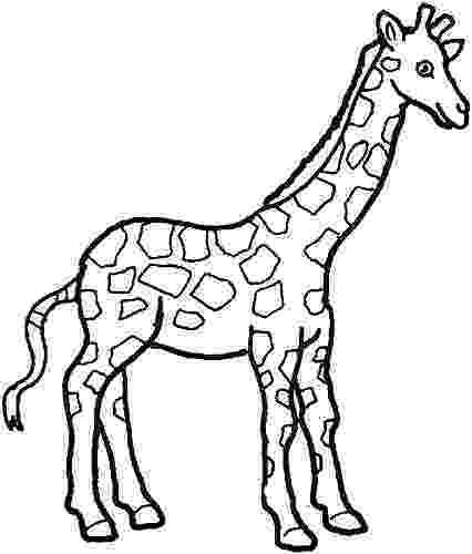 giraffe to color giraffe clipart images 101 clip art color giraffe to