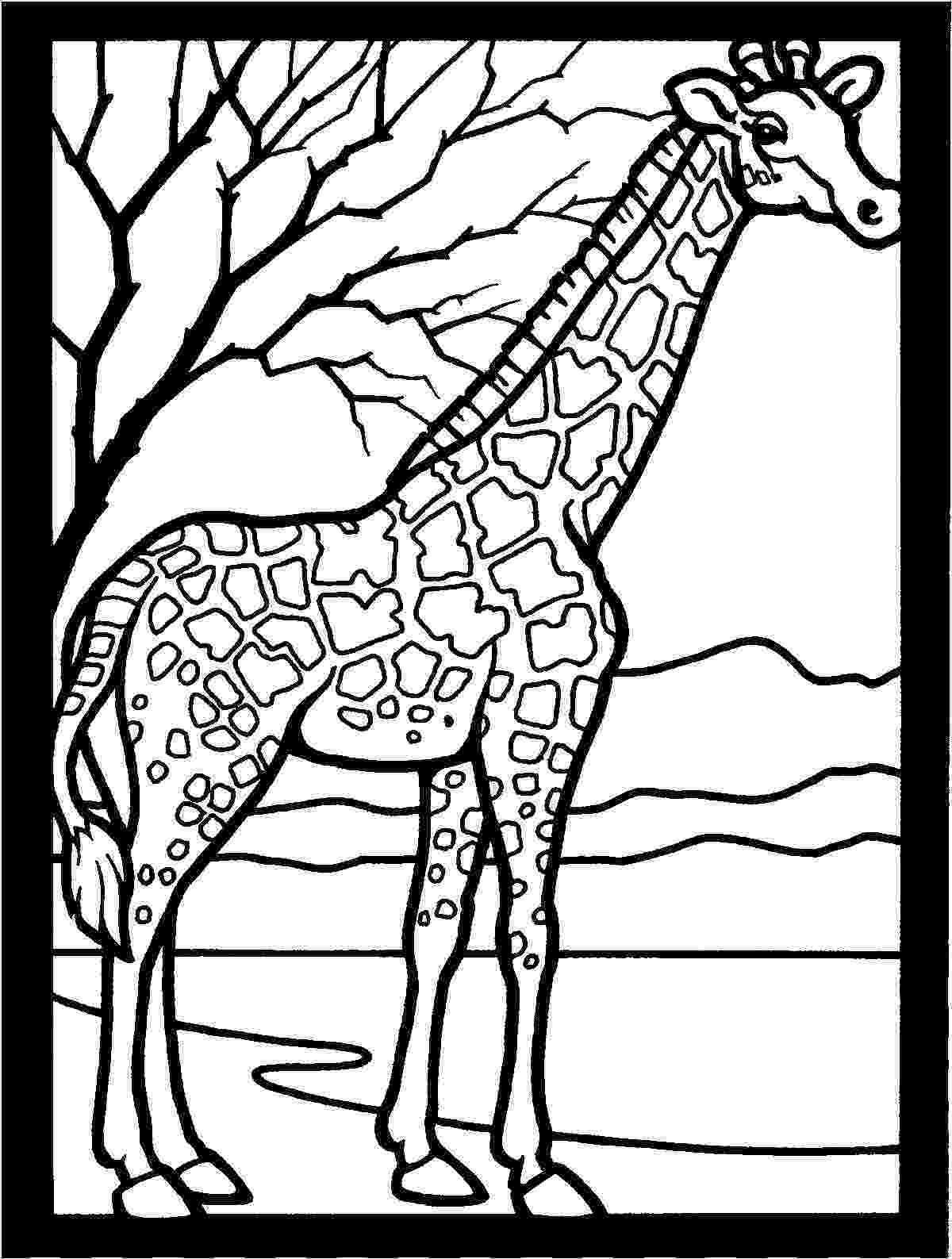 giraffe to color kids n funcom 45 coloring pages of giraffe to giraffe color