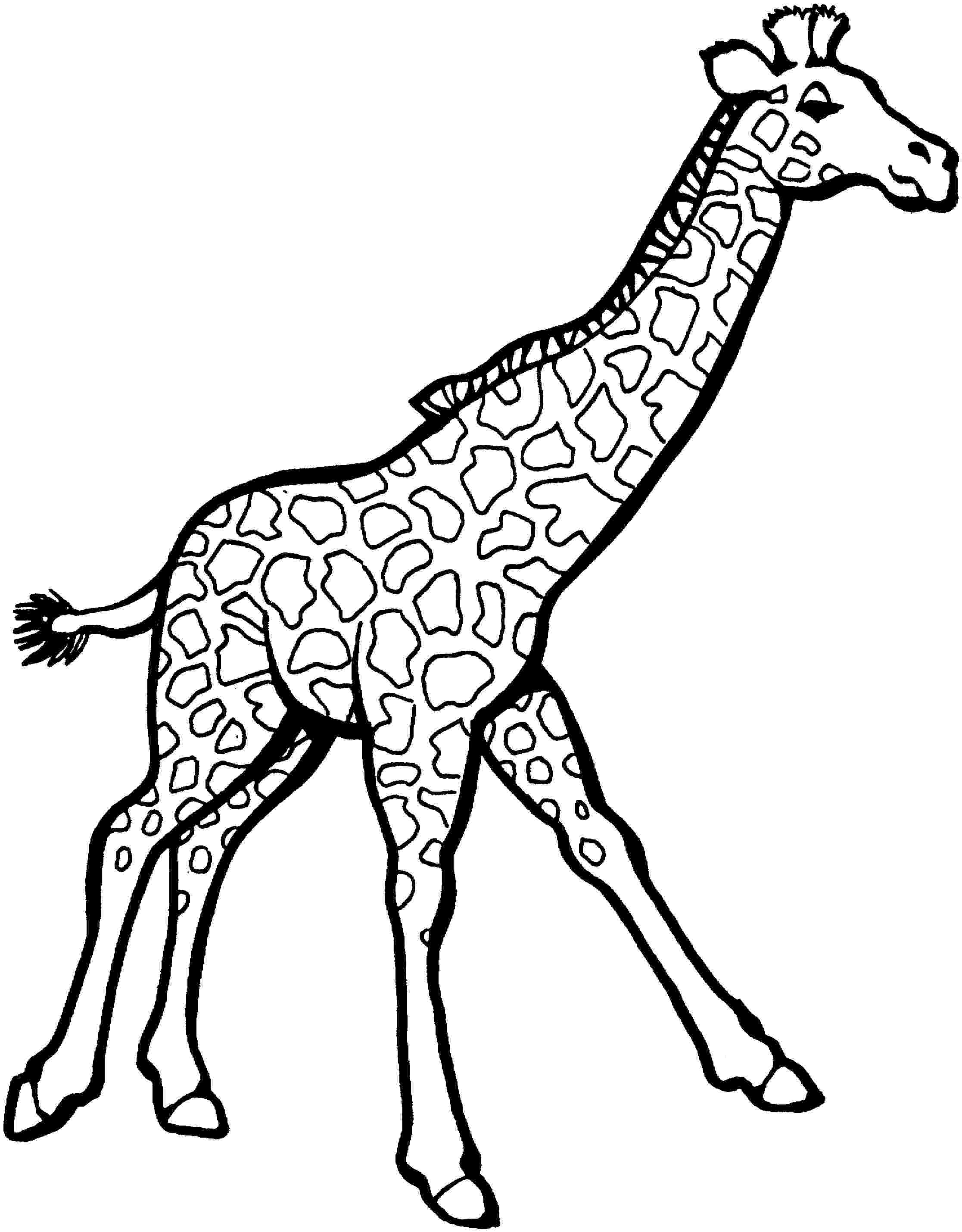 giraffe to color simple giraffe outline print out and color pictures of a giraffe to color