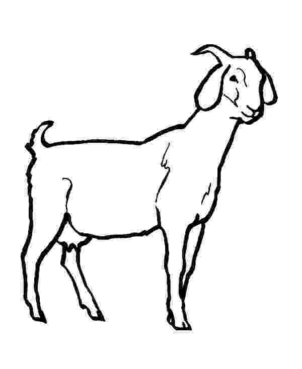 goat to color skinny goat coloring pages color luna to color goat