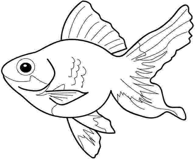 goldfish coloring page fish coloring pages team colors goldfish coloring page