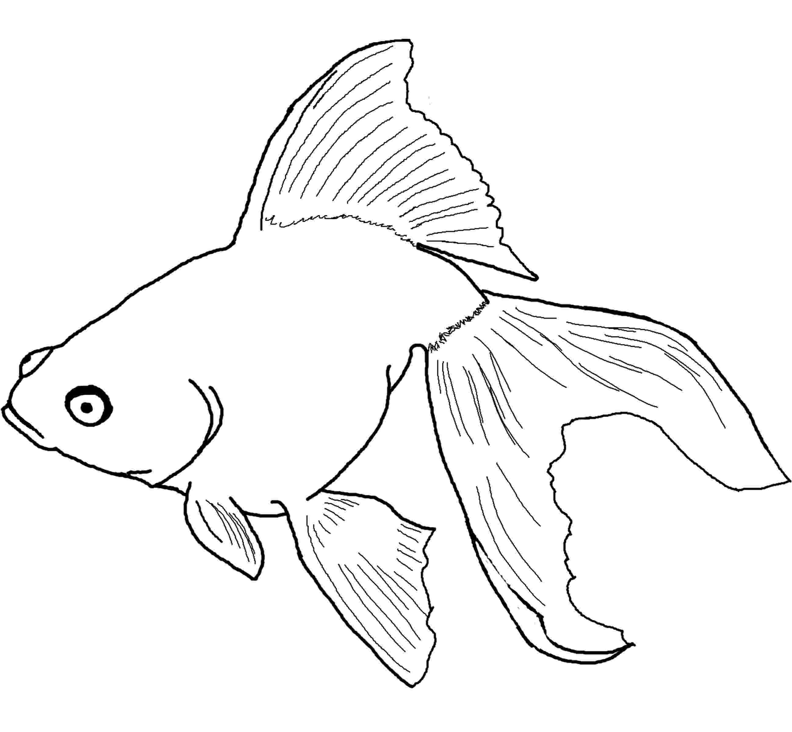goldfish coloring page free printable goldfish coloring pages for kids coloring goldfish page