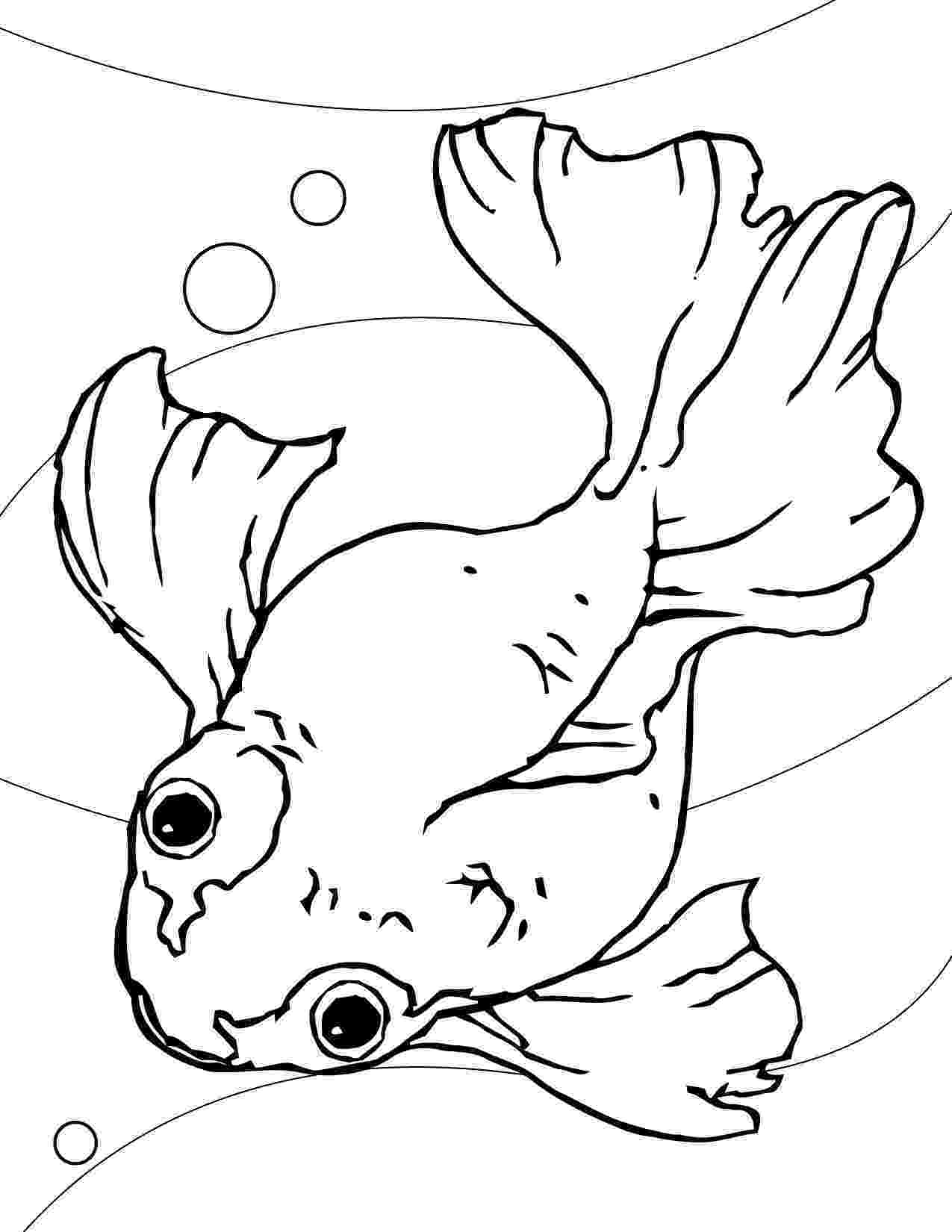 goldfish coloring page goldfish coloring pages team colors coloring goldfish page
