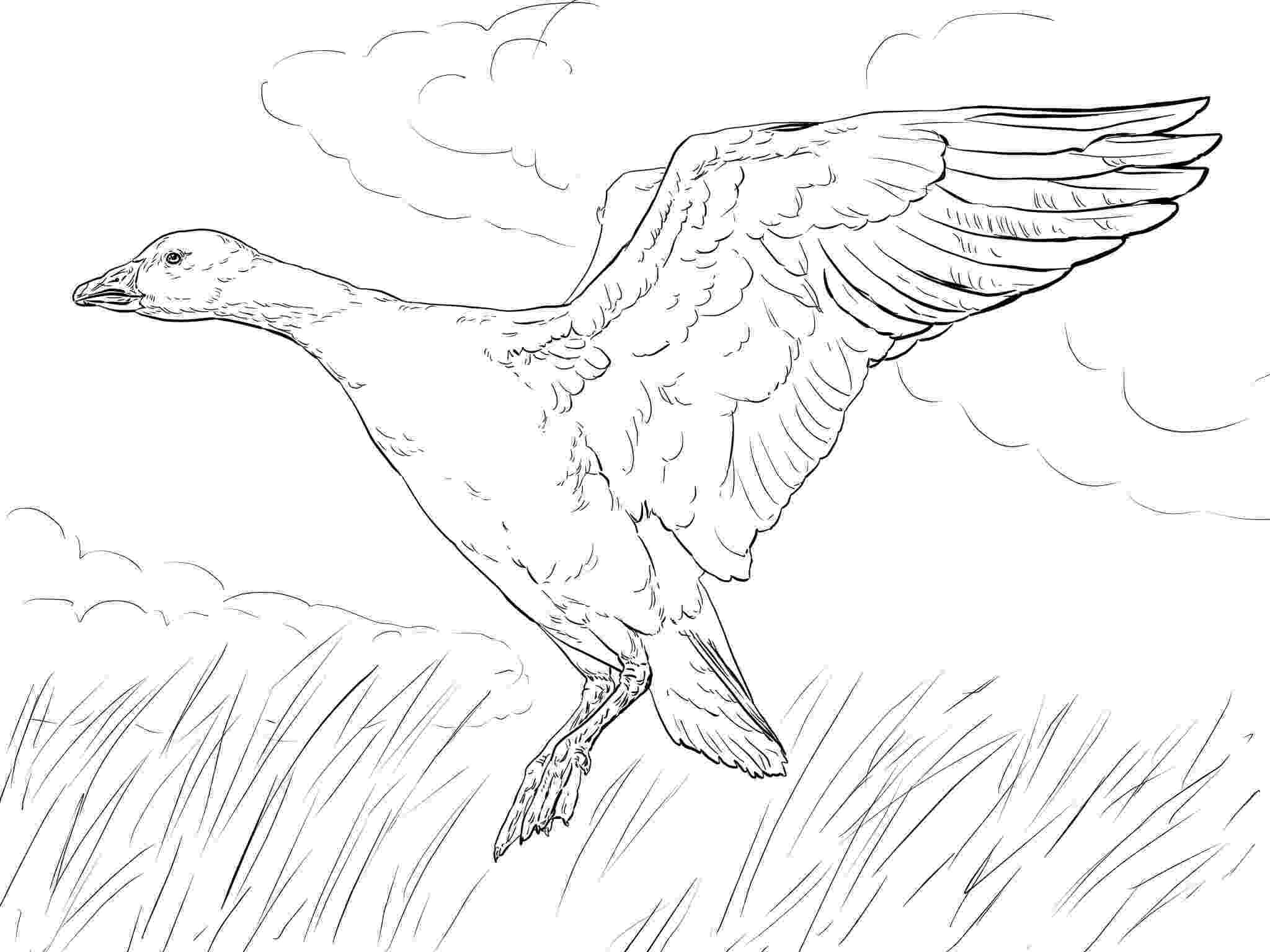 goose coloring page canada goose pictures you can color coloring page goose