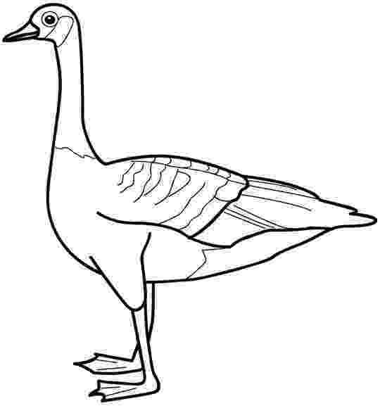 goose coloring page goose animal coloring pages to kids page goose coloring