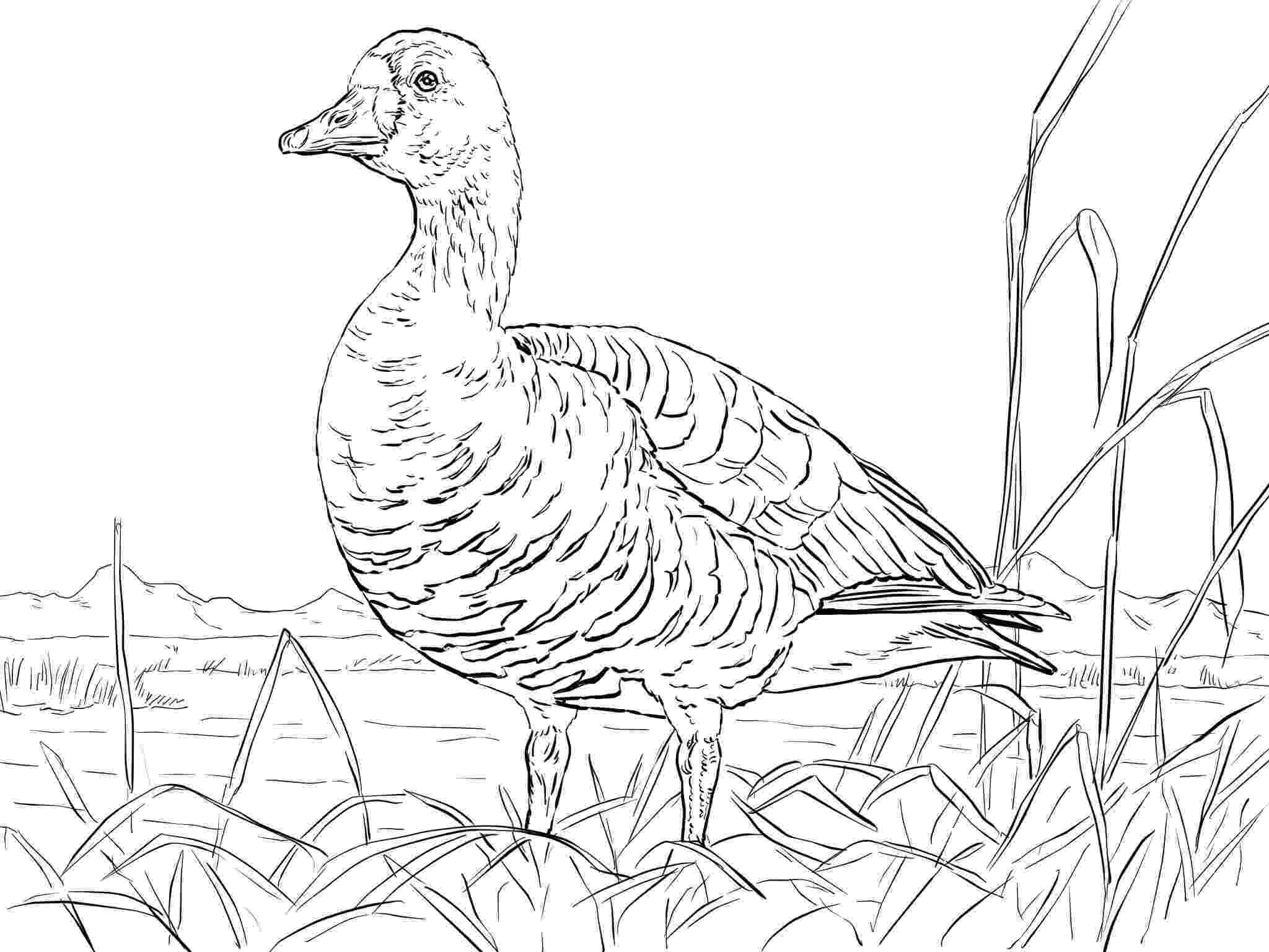 goose coloring page goose animal coloring pages to kids page goose coloring 1 2