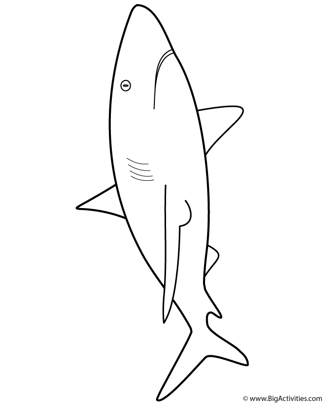 great white shark color animals letmecolor shark white great color