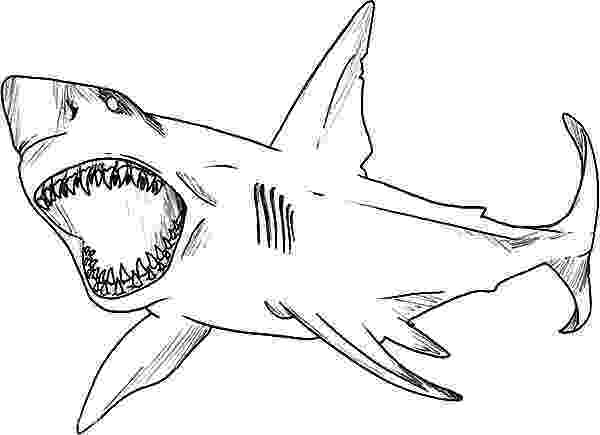great white shark color coloring page base shark coloring pages white sharks color shark great white