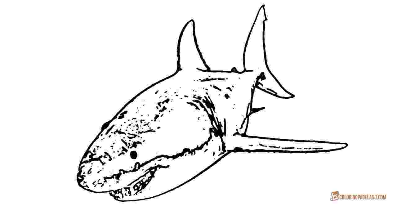 great white shark color free printable shark coloring pages for kids color white shark great