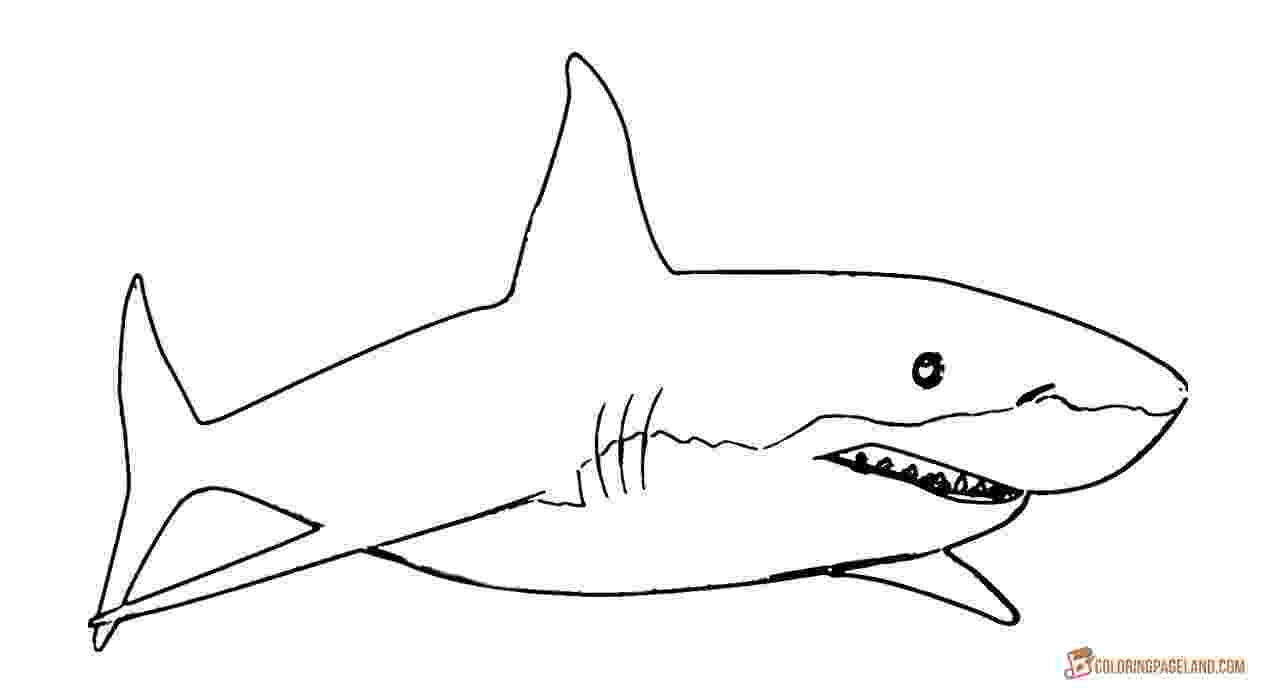 great white shark color great white shark coloring pages downloadable and color white shark great