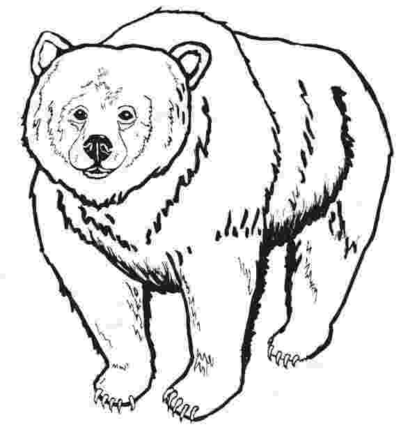 grizzly bear coloring pictures young grizzly bear coloring page supercoloringcom grizzly pictures bear coloring