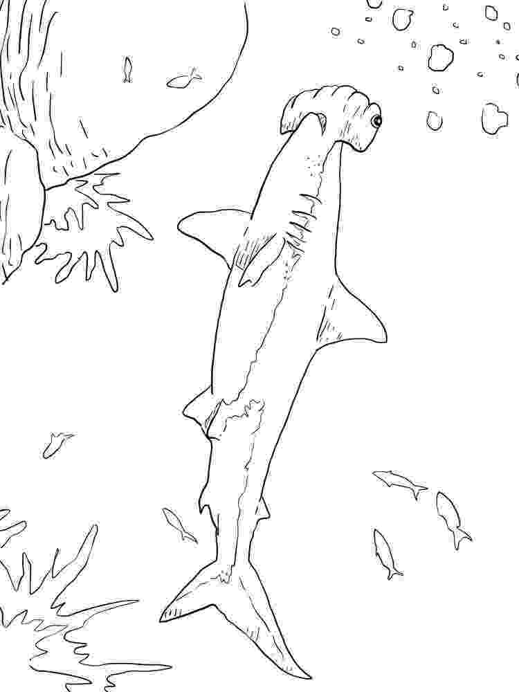 hammerhead shark color a happy hammerhead shark and his tools coloring page hammerhead shark color