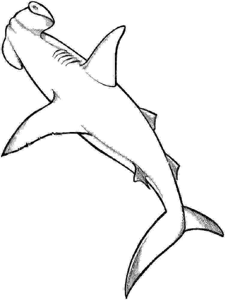 hammerhead shark color coloring pages wildlife research conservation color shark hammerhead