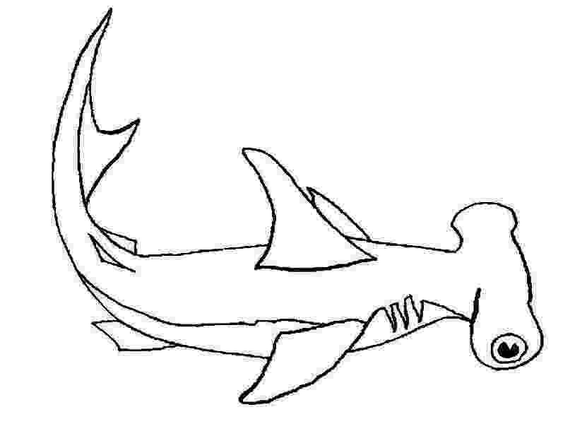 hammerhead shark color great hammerhead shark coloring pages hellokidscom shark color hammerhead