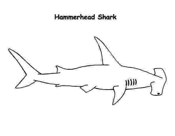 hammerhead shark color hammerhead shark coloring page favecraftscom color hammerhead shark