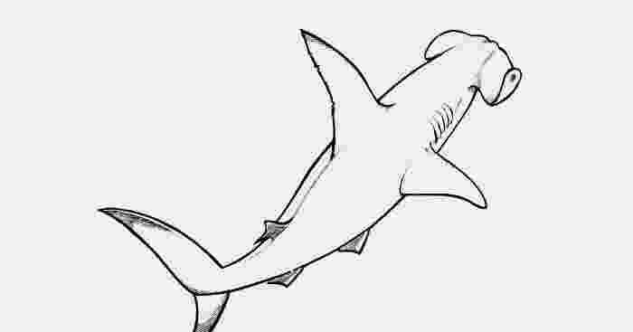 hammerhead shark color hammerhead shark coloring pages download and print shark color hammerhead