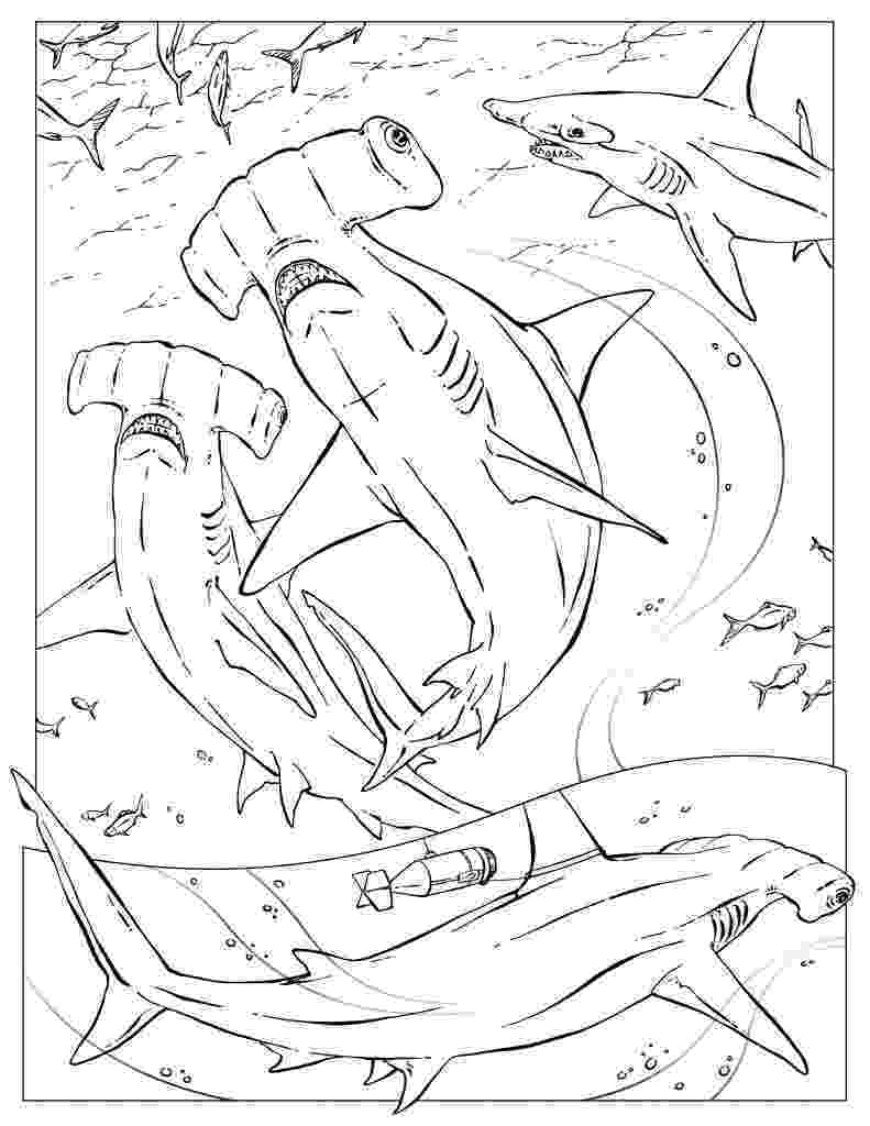 hammerhead shark color hammerhead shark coloring pages download and print shark color hammerhead 1 1