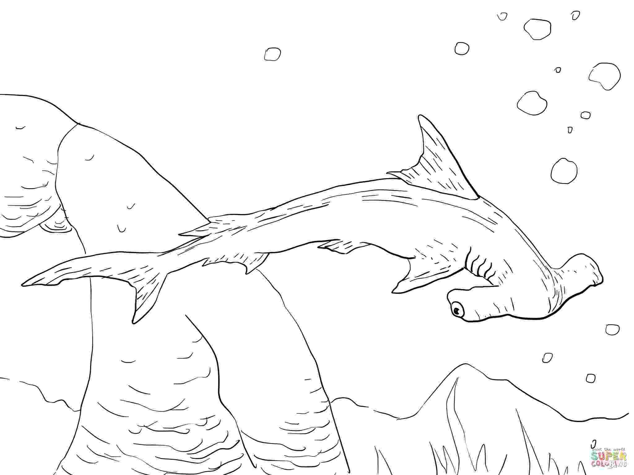 hammerhead shark color hammerhead shark coloring pages to print free coloring color shark hammerhead