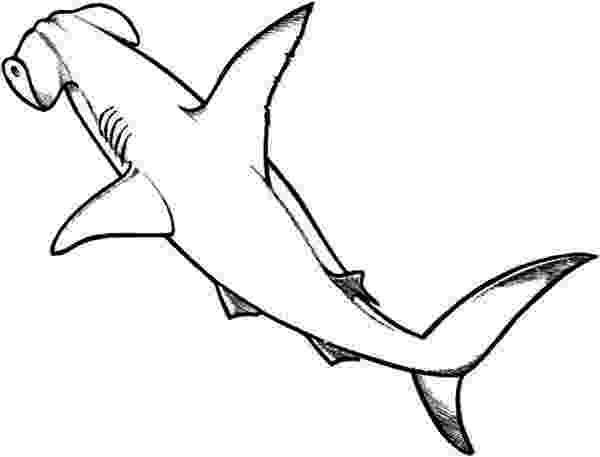 hammerhead shark color hammerhead shark template clipartsco shark color hammerhead