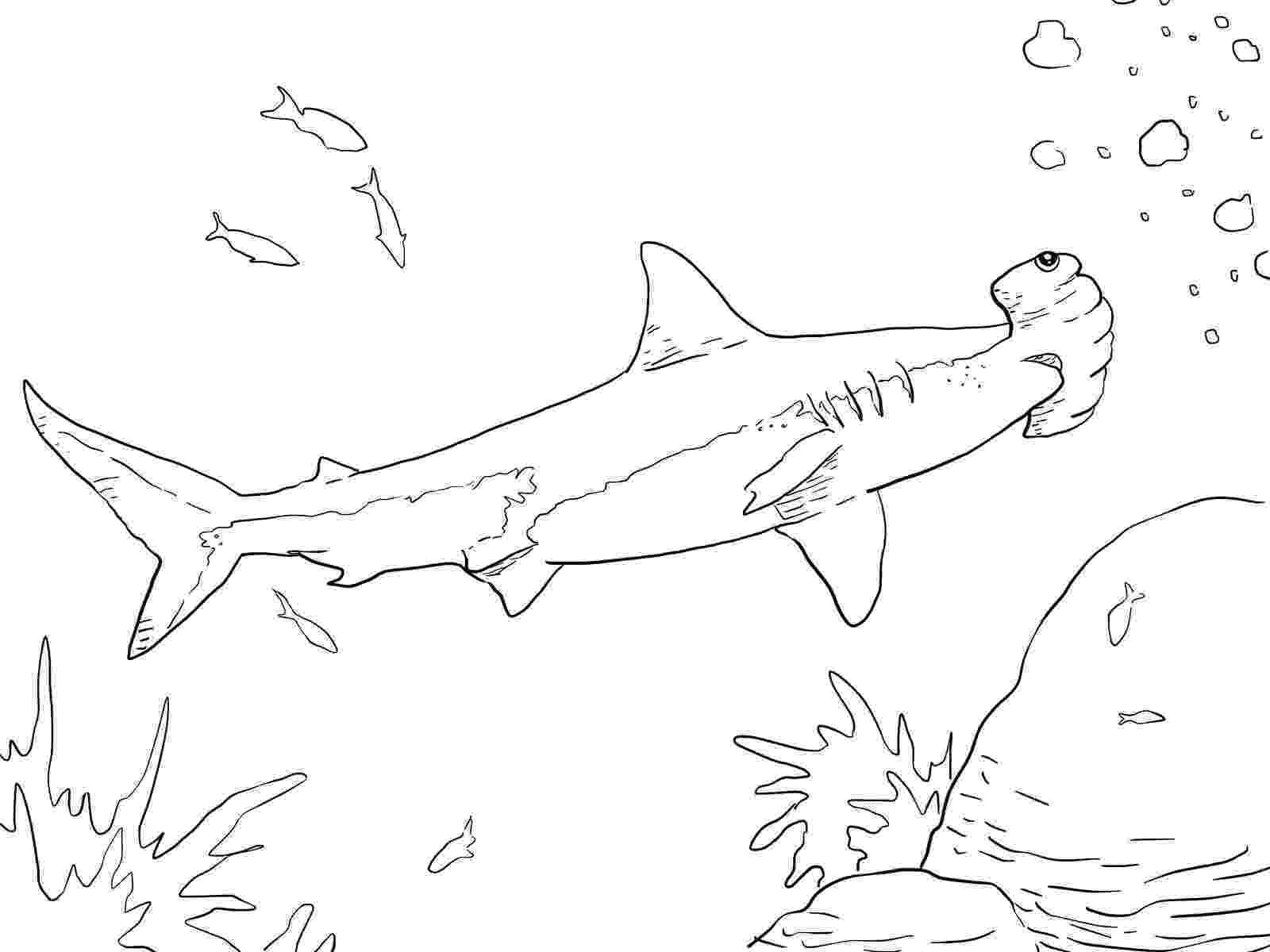 hammerhead shark color hammerhead sharks coloring page supercoloringcom shark hammerhead color