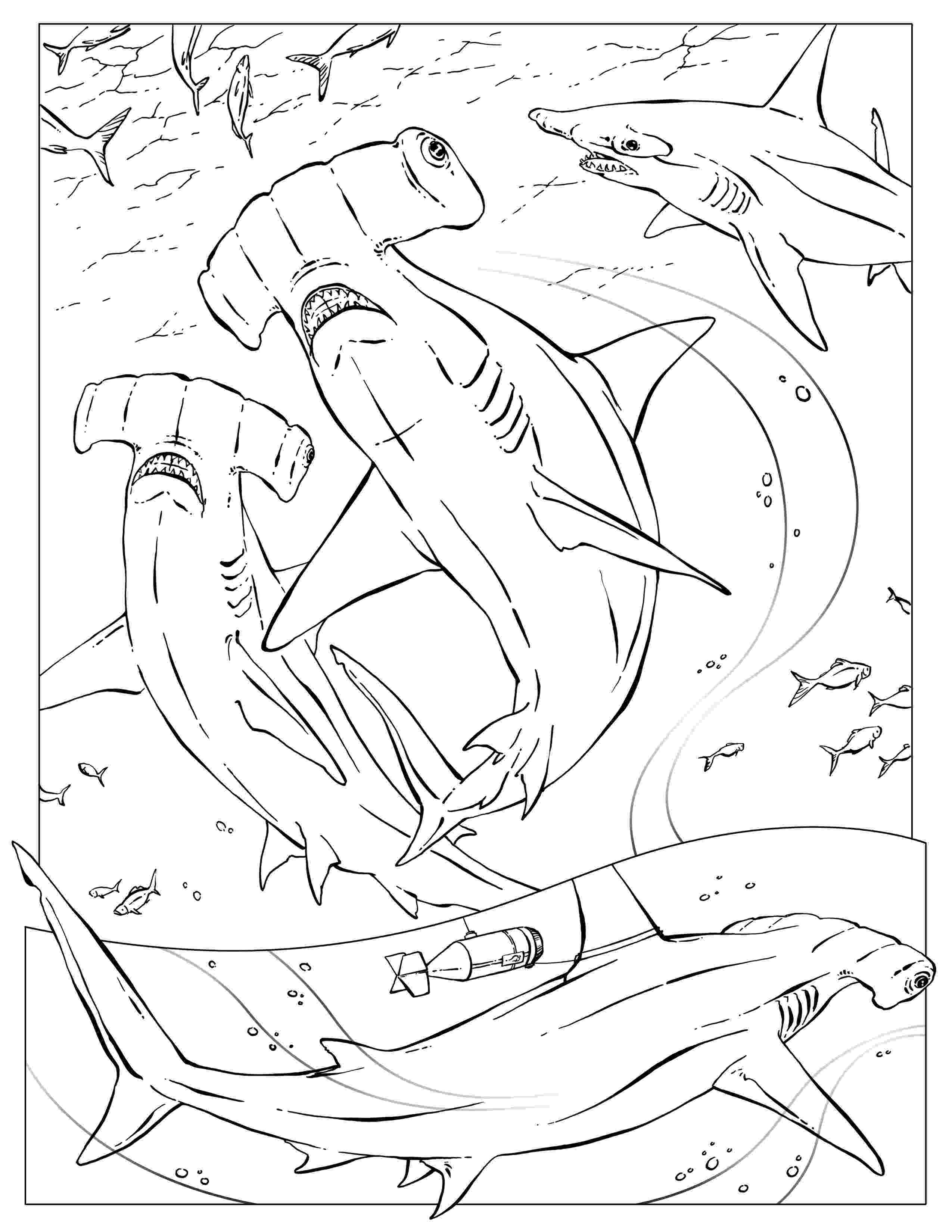 hammerhead shark coloring pages coloring pages wildlife research conservation hammerhead shark pages coloring