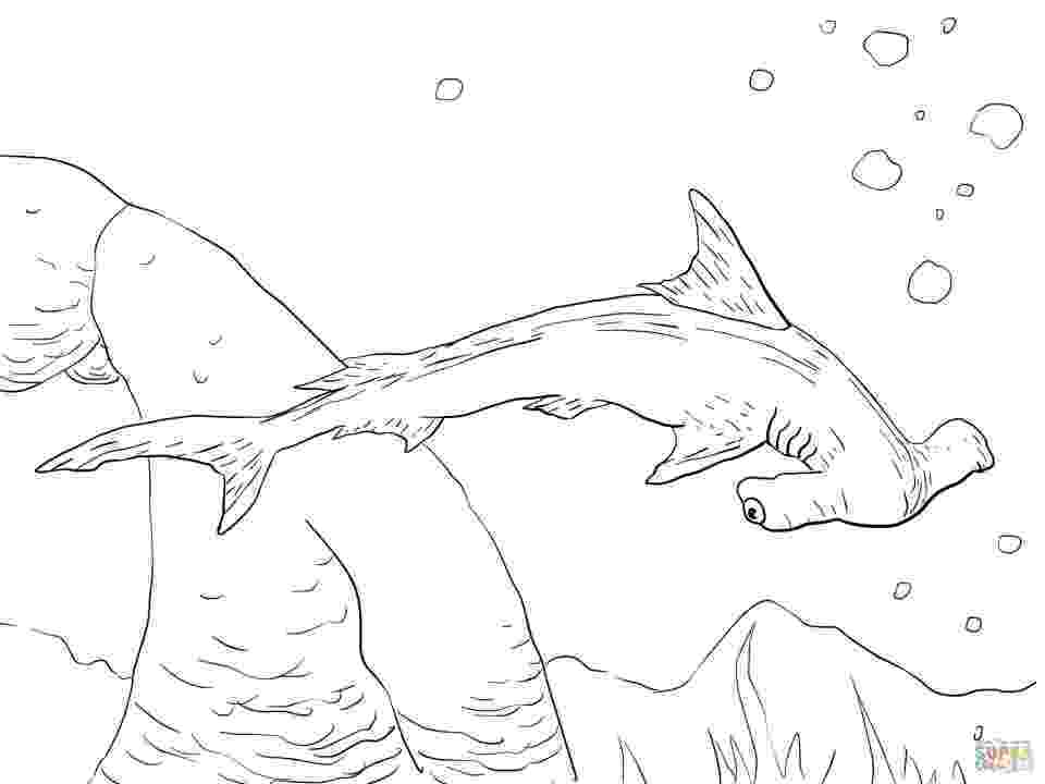 hammerhead shark coloring pages get this hammerhead shark coloring pages 33189 hammerhead pages coloring shark
