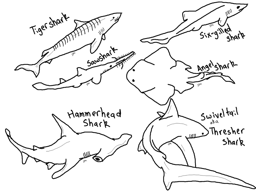 hammerhead shark coloring pages hammerhead shark with pilot fishes coloring page free hammerhead coloring shark pages