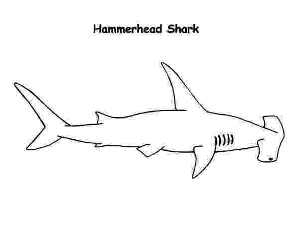hammerhead shark pictures to print shark coloring pages getcoloringpagescom hammerhead to shark print pictures