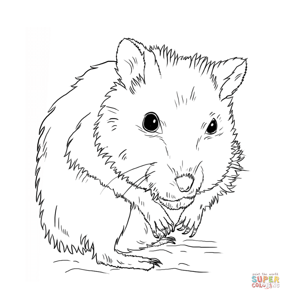 hamster coloring page hamster coloring pages to download and print for free coloring hamster page